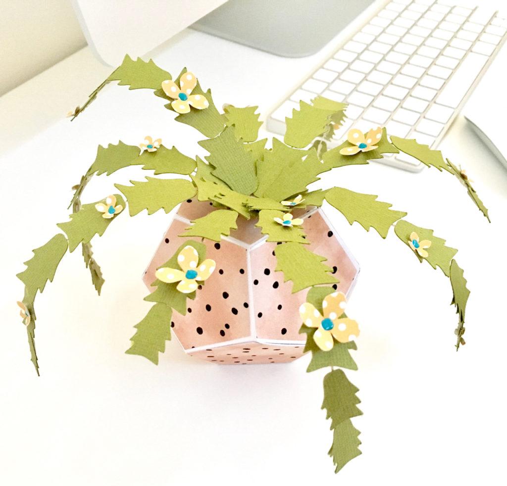 cactus finito