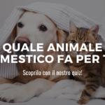 animale domestico