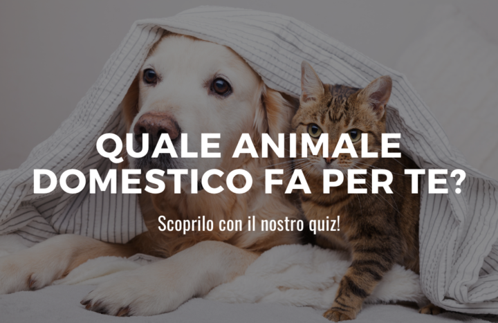 animale domestico