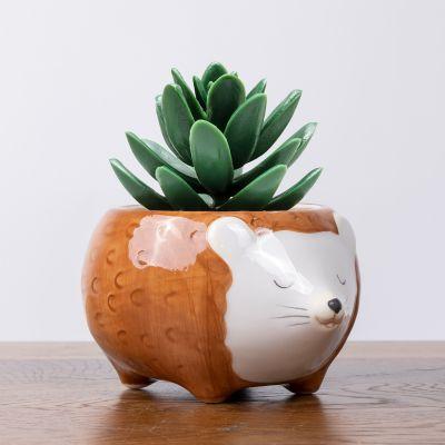Mini Vaso per Piante Riccio