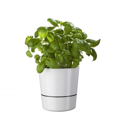 Vasi Auto-innaffianti Flower Pot Herb Hydro