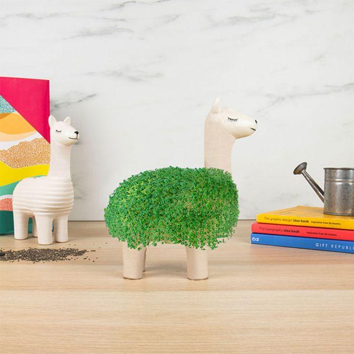 Il Lama Vegetale