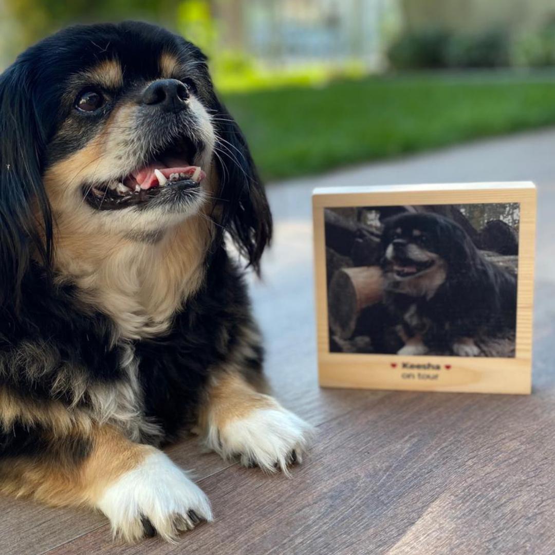 regali per amanti degli animali quadro in legno quadrato con foto e testo