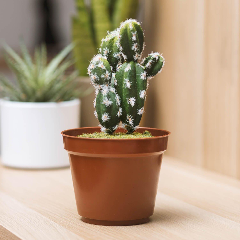 Mini Cassaforte Cactus