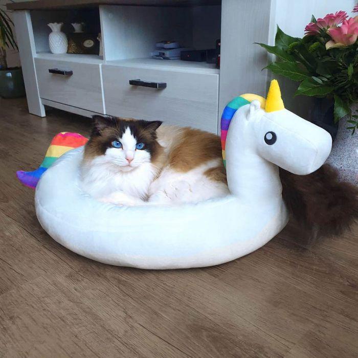 Cuccetta Unicorno per Cani e Gatti