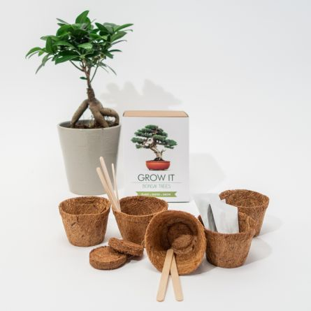 Grow It Albero Bonsai