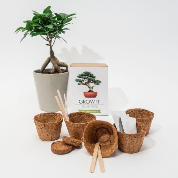 Grow It Albero Bonsai