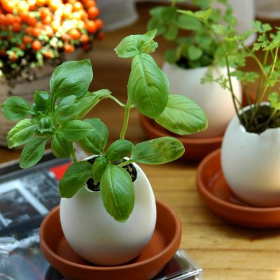 Fai da te - Eggling – Uova Con Erbe Aromatiche