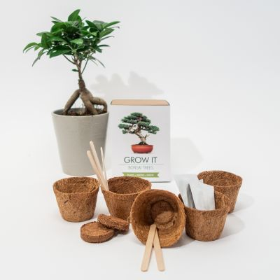 Regali per Lei - Grow It Albero Bonsai